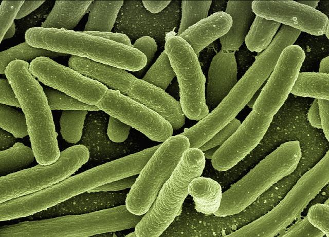 Licealista zbadał bakteriobójcze działanie miodu rzepakowego