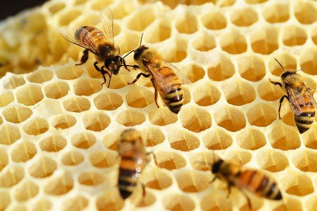 W ZS w Dowspudzie uczniowie będą brali udział w praktycznych lekcjach pszczelarstwa